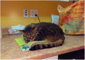 Arthur Veterinary Clinic - Declawing Complications